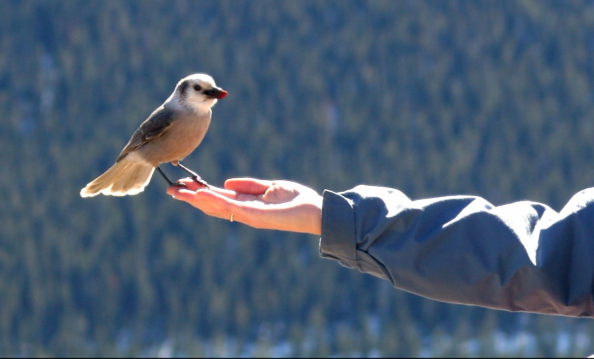 Open hand, free bird